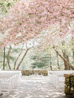 cherry blossom ceremony